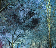 冬天不可思议的森林公园分支 免版税库存照片