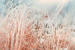 冬天与关闭的自然背景冻和积雪的草 库存图片
