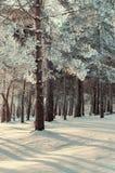 冬天与冬天冷淡的树的森林风景在冬天日落-葡萄酒的五颜六色的冬天森林定调子 库存照片