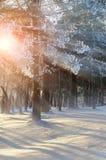 冬天与冬天冷淡的树的森林风景在早晨阳光五颜六色的冬天森林视图下 库存照片