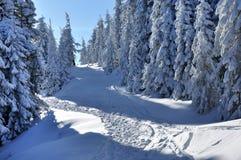 冬天与冷杉木的山风景在倾斜 免版税库存图片