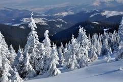 冬天与冷杉木的山风景在倾斜 免版税库存照片