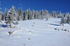 冬天与冷杉木的山风景在倾斜 免版税图库摄影