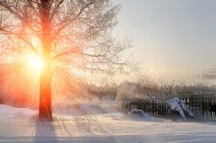 冬天与冷淡的冬天树和阳光射线-冬天风景场面的日落风景 免版税库存照片