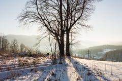 冬天与冷淡的冬天树和阳光的日落风景 冬天风景场面 在冷的日落的冬天农村风景 免版税库存照片