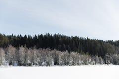冬天与冷淡的树的领域风景由软的在温暖的口气的日落轻的多雪的风景场面点燃了 库存图片