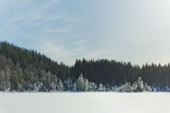 冬天与冷淡的树的领域风景由软的在温暖的口气的日落轻的多雪的风景场面点燃了 库存照片