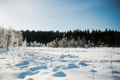 冬天与冷淡的树的领域风景由软的在温暖的口气的日落轻的多雪的风景场面点燃了 免版税库存图片