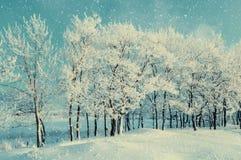 冬天与多雪的冬天树和降雪的森林风景 冬天晚上多雪的冬天树丛 免版税图库摄影