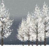 冬天与多雪的树的夜背景 免版税库存图片