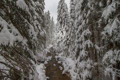 冬天与岩石的山小河在雪盖的森林里 免版税图库摄影