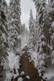 冬天与岩石的山小河在雪盖的森林里 库存图片