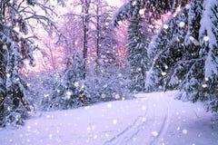 冬天与日落的夜风景在森林里 库存照片