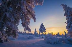冬天与树的晚上风景 库存照片