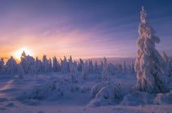 冬天与树的晚上风景 免版税库存图片