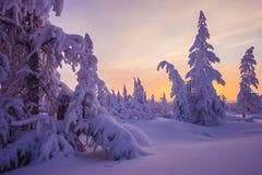 冬天与树的晚上风景 免版税图库摄影