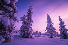 冬天与树的晚上风景 图库摄影