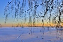 冬天与桦树分支的日落风景 免版税库存照片