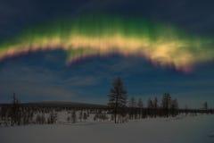 冬天与森林、多云天空和极光borealis的夜风景在taiga 库存图片