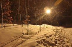 冬天与森林的夜风景有黄色叶子的,盖用软的雪和淡色的射线 免版税库存图片