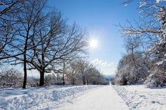 冬天与积雪的结构树的路横向 免版税库存图片