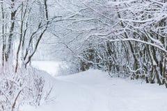 冬天与雪的森林风景 免版税库存照片
