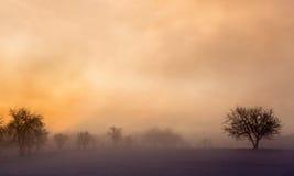冬天与雾和树的日出风景 免版税图库摄影