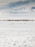 冬天与驯鹿的山风景 免版税库存图片