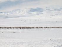冬天与驯鹿的山风景 免版税库存照片