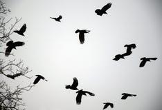 冬天乌鸦 库存图片