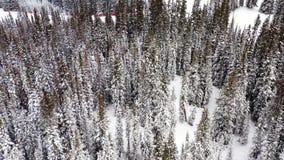 冬天云杉和杉木用雪盖的林木空中跨线桥射击, 股票录像