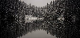 冬天云杉的反射 免版税库存照片