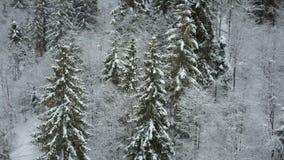 冬天云杉的多雪的森林低飞行鸟瞰图在雪和松树的盖的河 野生生物秀丽  影视素材