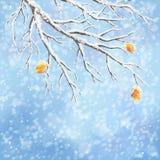 冬天传染媒介积雪的霜分支背景 免版税库存照片