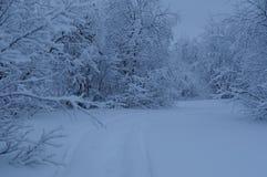 冬天传说森林 免版税库存图片