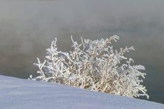 冬天传说 免版税库存照片
