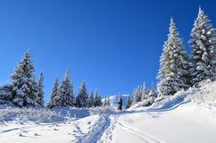 冬天传说 免版税库存图片