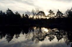 冬天光在Baneheia,克里斯蒂安桑 免版税库存照片