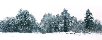 冬天全景风景的杉木森林 免版税库存照片