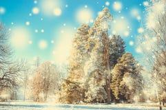 冬天公园在一个晴天 免版税库存图片
