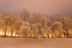 冬天公园在用雪包括的晚上 库存照片