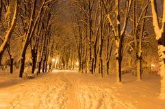 冬天公园在用雪包括的晚上 库存图片