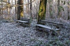 冬天公园早晨 库存图片