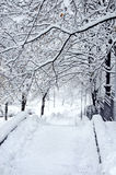 冬天公园魔术视图  免版税库存照片