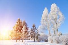 冬天公园 免版税库存图片