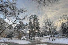 冬天公园 免版税库存照片