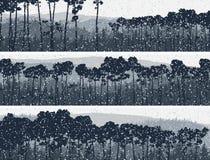 冬天具球果松林水平的横幅。 免版税库存照片