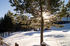 冬天冒险 moloda山星期日乌克兰视图冬天 carpathians 乌克兰 库存图片