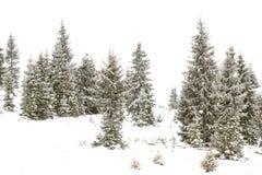冬天冷杉木森林,冬天妙境 库存图片