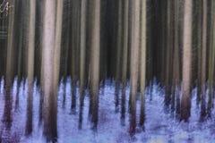 冬天冷杉森林摘要 免版税图库摄影